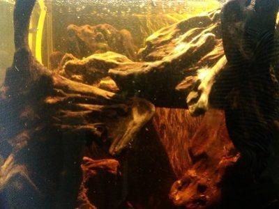 レグラスフラットF3050 洞窟水槽リフォーム 其の壱